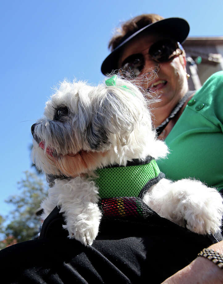 """Precious"" takes in the activities at the Arneson River Theater with owner Rita Morris as St. Patrick's Day is celebrated on the Riverwalk and La Villita  on  March 16, 2013. Photo: TOM REEL, Express-News"