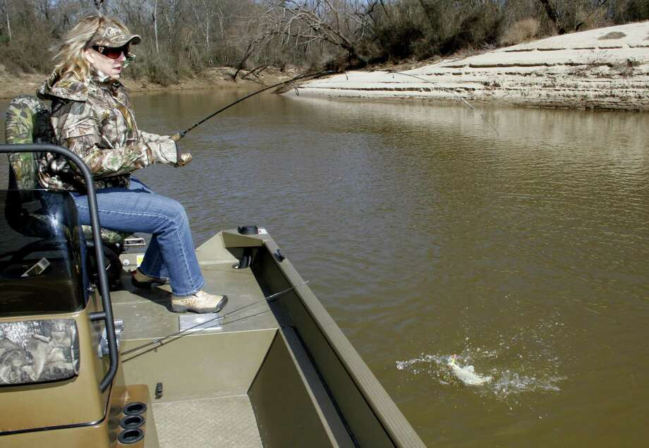 Fast fishing for white bass during their annual spring spawning run should continue into April on East Texas rivers such as the Sabine, Trinity, San Jacinto and  Neches. Photo: Picasa