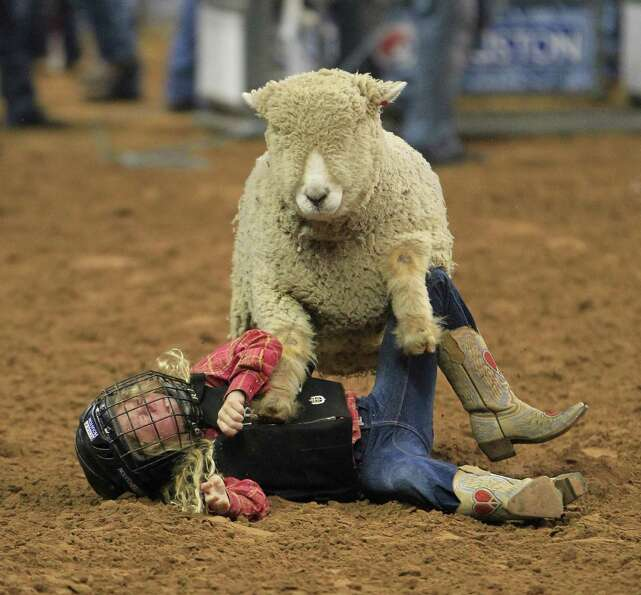Lenin Ortiz gets run over by a sheep during the Mutton Bustin'  at the Houston Livestock Show and Ro
