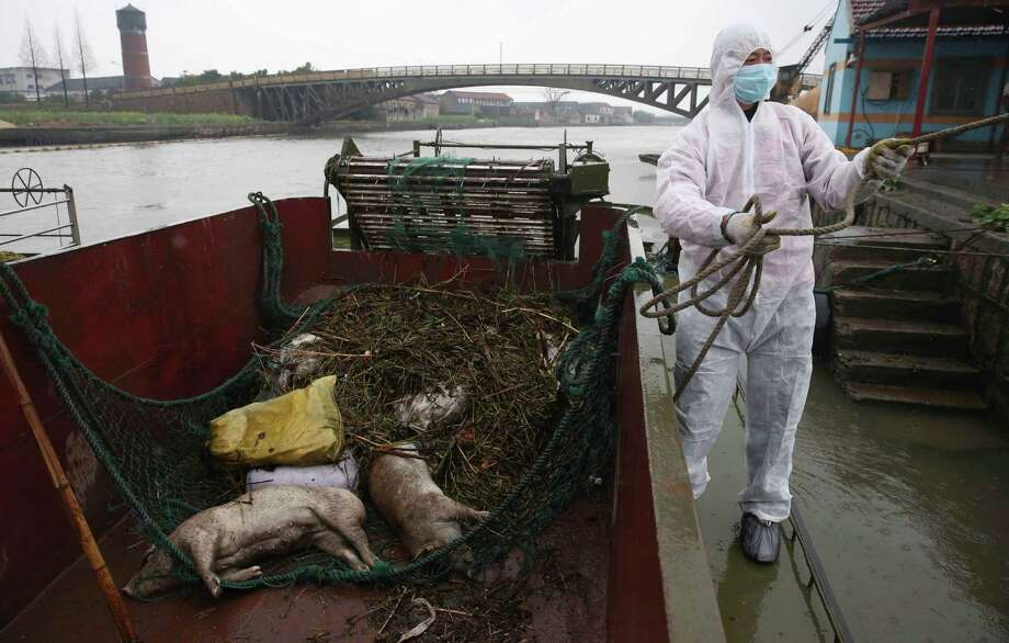 A worker in protective clothing prepares to haul away dead pigs on Wednesday pulled from a river along Zhonglian village of Jinshan district in Shanghai. The number of dead pigs found in the Shanghai river that provides drinking water to the Chinese financial hub has risen to 7,545, after local authorities retrieved 944 more pigs Thursday. (AP Photo/File)  Photo: AP
