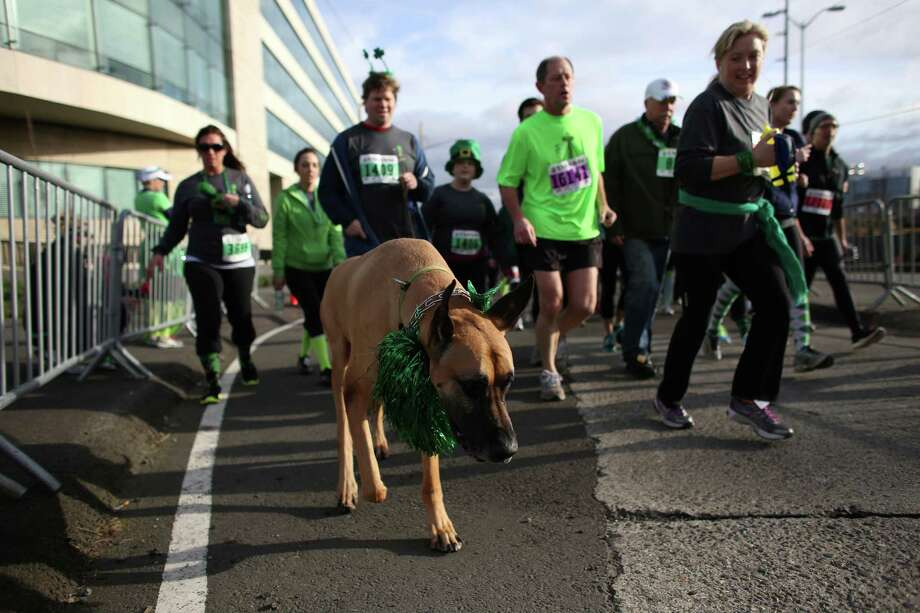 People and a four legged competitor make their way along the course during the St. Patrick's Day Dash in downtown Seattle. Thousands of green-clad people participated in the annual race and  beer fest at Seattle Center. Photo: JOSHUA TRUJILLO, SEATTLEPI.COM / SEATTLEPI.COM