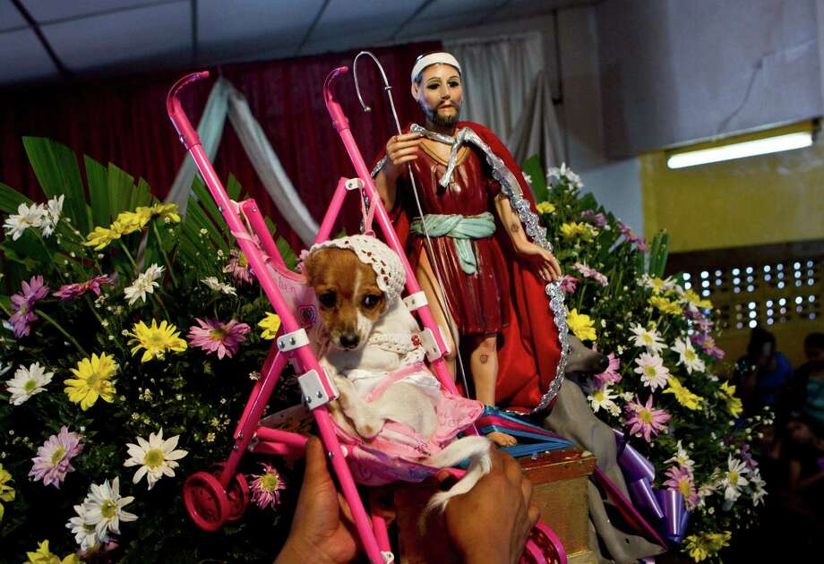 A man holds up his dog, dressed as a baby sitting in a stroller, close to a statue of Saint Lazarus, patron of the sick, during a ceremony at a church in the Monimbo neighborhood of Masaya, Nicaragua, Sunday, March 17, 2013. Catholics in Nicaragua associate Saint Lazarus with dogs, and dress up their pets for a Catholic blessing, asking the saint to keep their dogs healthy. Photo: Esteban Felix, Associated Press / AP