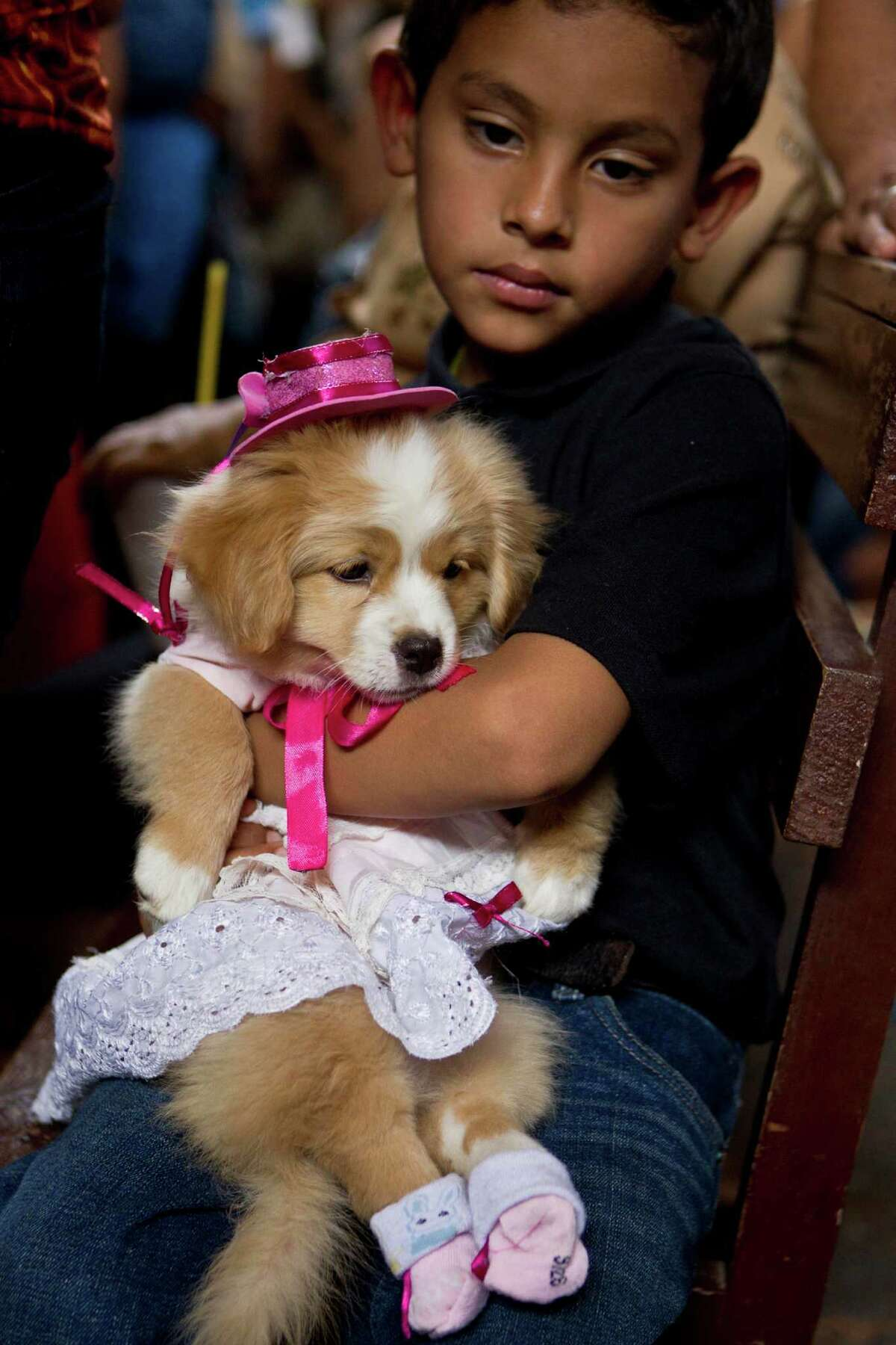A boy holds his dog wearing a costume during an animal blessing ceremony in honor of Saint Lazarus, patron of the sick, at a church in the Monimbo neighborhood of Masaya, Nicaragua, Sunday, March 17, 2013. Catholics in Nicaragua associate Saint Lazarus with dogs, and dress up their pets for a Catholic blessing, asking the saint to keep their dogs healthy.