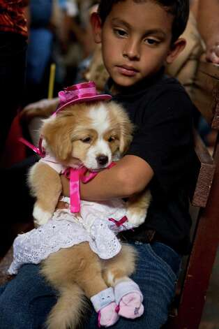A boy holds his dog wearing a costume during an animal blessing ceremony in honor of Saint Lazarus, patron of the sick, at a church in the Monimbo neighborhood of Masaya, Nicaragua, Sunday, March 17, 2013. Catholics in Nicaragua associate Saint Lazarus with dogs, and dress up their pets for a Catholic blessing, asking the saint to keep their dogs healthy. Photo: Esteban Felix, Associated Press / AP