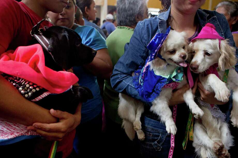 Pet owners hold their dogs in costumes during an animal blessing ceremony in honor of Saint Lazarus, patron of the sick, at a church in the Monimbo neighborhood of Masaya, Nicaragua, Sunday, March 17, 2013. Catholics in Nicaragua associated Saint Lazarus with dogs, and dress up their pets for a Catholic blessing, asking the saint to keep their dogs healthy. Photo: Esteban Felix, Associated Press / AP