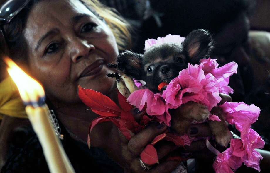 A woman holds her dressed dog during a mass for San Lazaro, on March 17, 2013, in Monimbo neighborhood, in Masaya, 30km south of Managua. According to tradition in Nicaragua, faithfuls ask for the health of their dogs at San Lazaro and they pay these favors back bringing them dressed in costumes to attend mass in honor of the saint. Photo: HECTOR RETAMAL, AFP/Getty Images / AFP