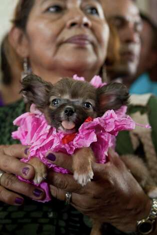 A woman holds her dog in costume during an animal blessing ceremony in honor of Saint Lazarus, patron of the sick, at a church in the Monimbo neighborhood of Masaya, Nicaragua, Sunday, March, 17, 2013. Catholics in Nicaragua associated Saint Lazarus with dogs, and dress up their pets for a Catholic blessing, asking the saint to keep their dogs healthy. Photo: Esteban Felix, Associated Press / AP