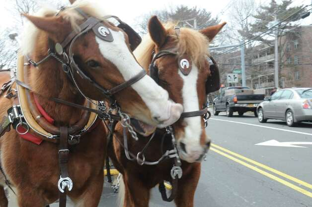Horses on the Well, Fargo and Company  the Greenwich's 39th annual St. Patrick's Day parade at Greenwich Avenue, in Greenwich, Conn., March 17, 2013. Photo: Helen Neafsey / Greenwich Time