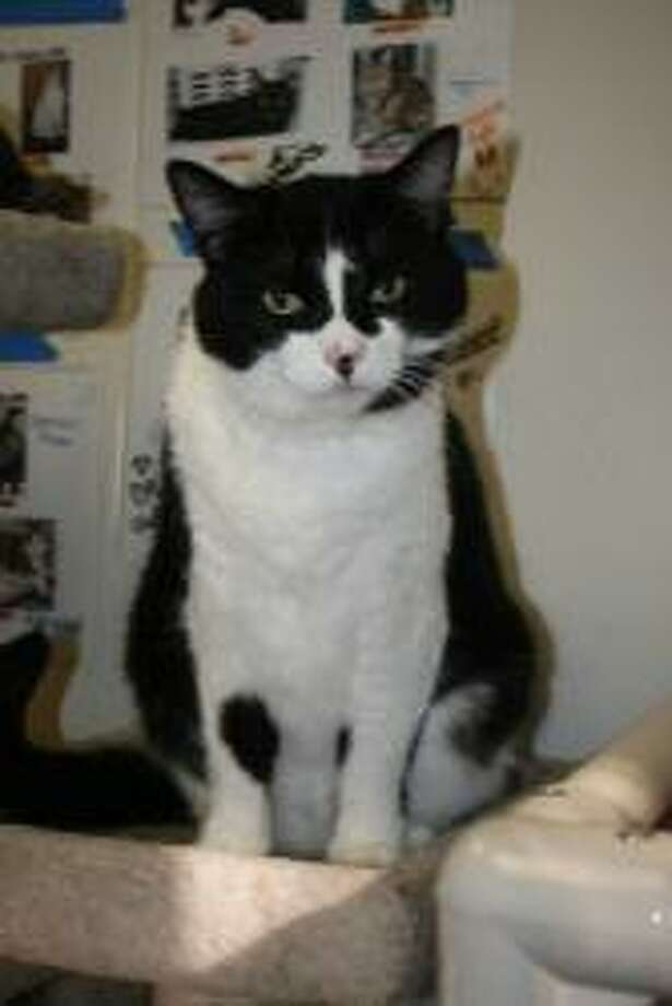 Colette is a sweet and talkative girl, about 6 years old, who is ready for a forever home. (Mary Lou Baker)