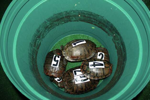 Our cameras were at the turtle races at Madison's on Sunday. Did we see you there? Photo: Jose D. Enriquez III