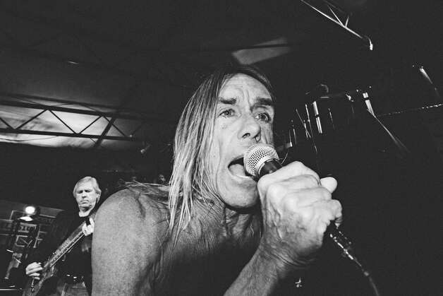 Iggy Pop, up close and personal.  Photo: Butchershop Creative