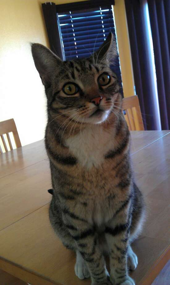 His owners named him Zeus because they could tell he would rule their house. Photo: Courtesy Photo