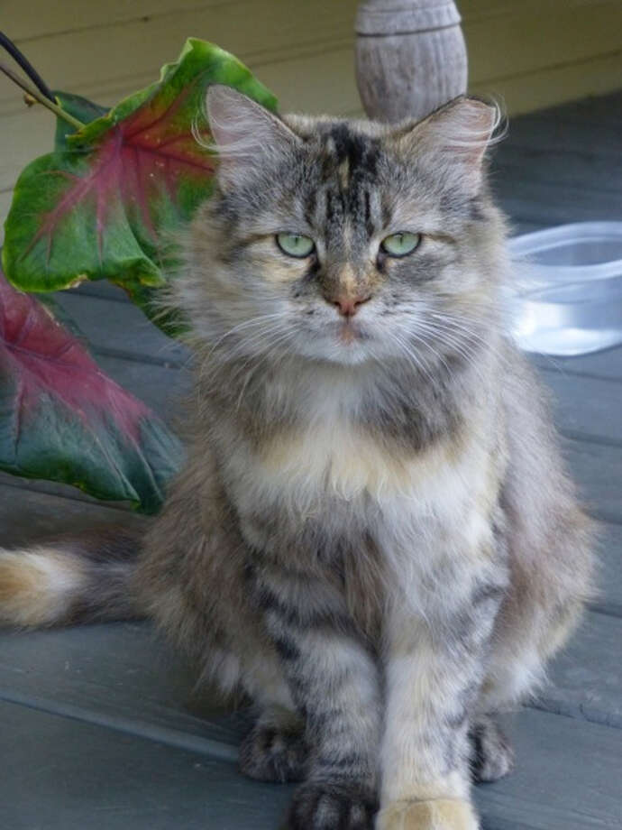 A porch cat, Madeleine is a lone sentry, keeping an eye on her home like an intrepid watchdog. Photo: Courtesy Photo