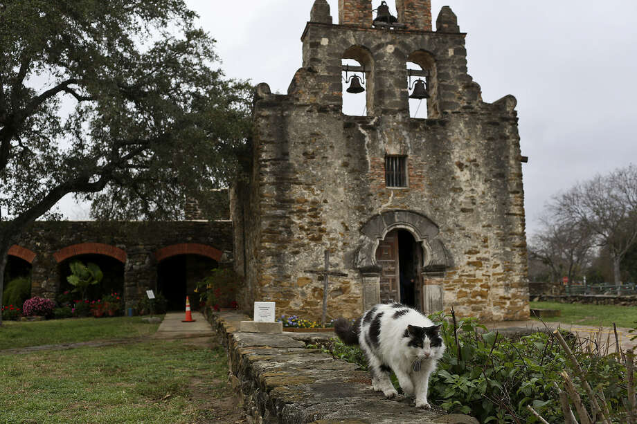 A reader praises the heartwarming story about the mission cats whose duties, while not sacred, are certainly significant. They do their part to keep the mission free of rodents. Photo: Lisa Krantz, San Antonio Express-News