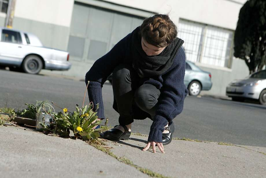 Blaze Gonzalez of San Francisco's Urban Hedgerow scoops out dandelions from a cracked urban sidewalk for repotting. Photo: Jessica Olthof, The Chronicle