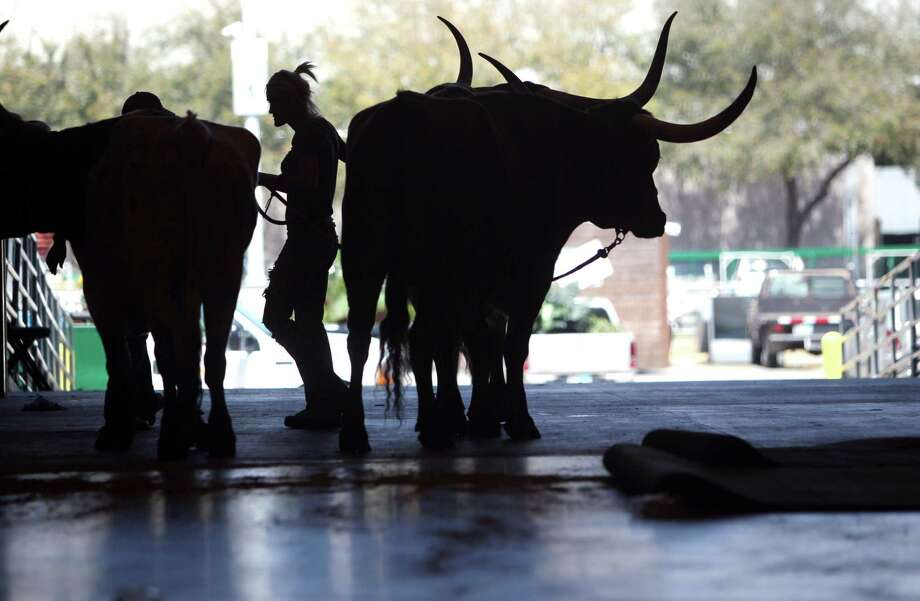 On of Ken Hoffman's favorite things is the annual Houston Livestock Show & Rodeo. Photo: Mayra Beltran, Houston Chronicle / © 2013 Houston Chronicle