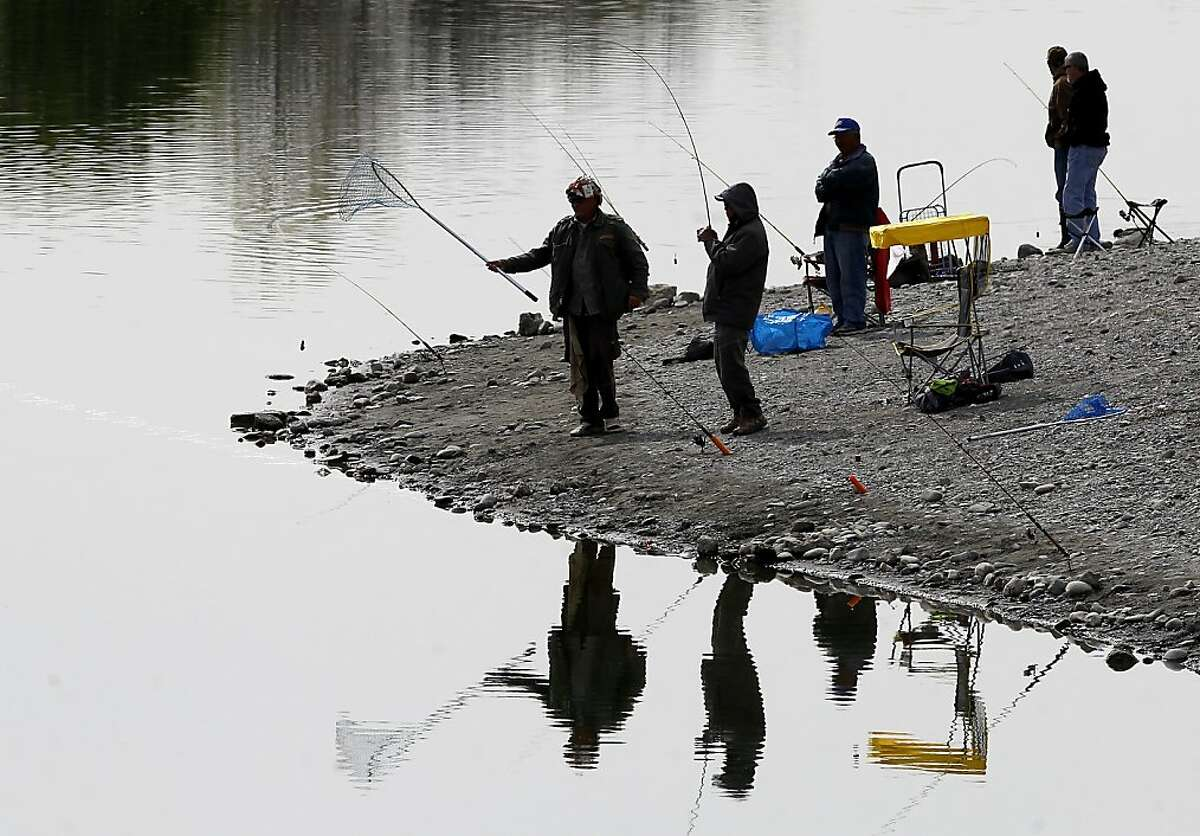 At Horseshoe Lake, a fisherman hauls in a rainbow trout Monday March 18, 2013. The Alameda County Water District and the East Bay Regional Park District are asking fisherman to trade in their old lead weights for steel and ceramic tackle because lead leaches into the water at fishing spots like Quarry Lakes in Fremont, Calif.