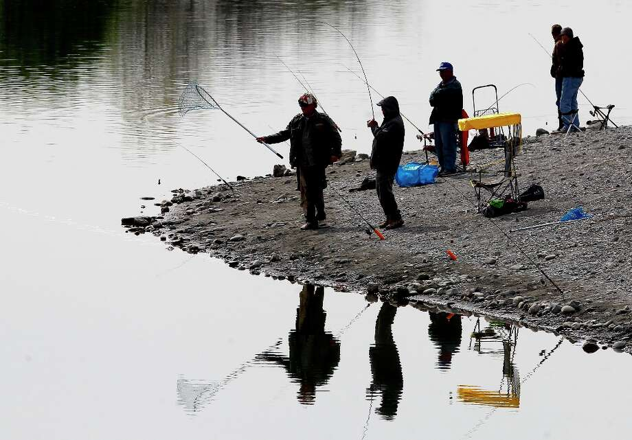 At Horseshoe Lake, a fisherman hauls in a rainbow trout Monday March 18, 2013. The Alameda County Water District and the East Bay Regional Park District are asking fishermen to trade in their old lead weights for steel and ceramic tackle because lead leaches into the water at fishing spots like Quarry Lakes in Fremont, Calif. Photo: Brant Ward, The Chronicle / ONLINE_YES