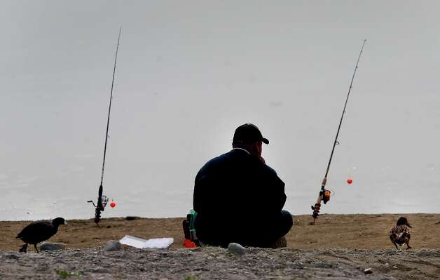 At Horseshoe Lake in Fremont, Calif., a fisherman shares his spot with a couple water fowl Monday March 18, 2013. The Alameda County Water District and the East Bay Regional Park District are asking fishermen to trade in their old lead weights for steel and ceramic tackle because lead leaches into the water at fishing spots like Quarry Lakes in Fremont, Calif. Photo: Brant Ward, The Chronicle / ONLINE_YES