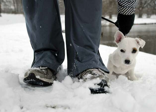 Shiner, a three month old Jack Russell terrier plays in the snow as her owner, Aaron Bagwell of Albany took her for a walk in Washington Park on Tuesday, March 19, 2013 in Albany, NY.   (Paul Buckowski / Times Union) Photo: Paul Buckowski