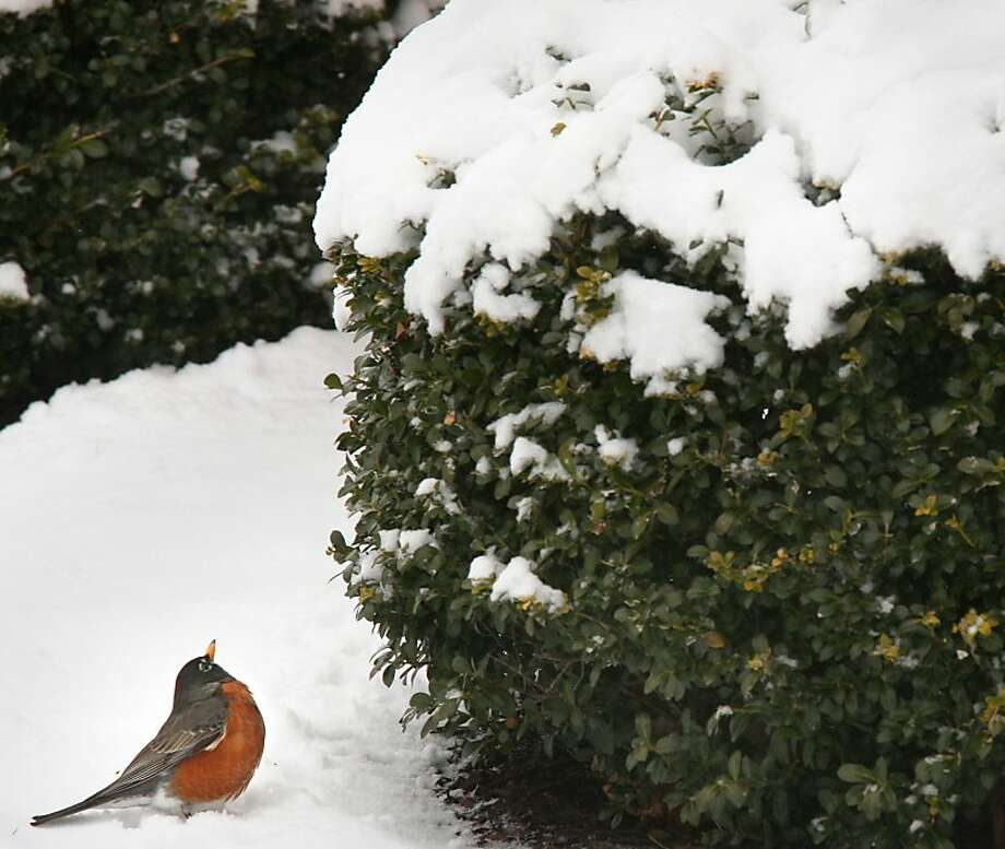 Equinox, my eye! A harbinger of spring wonders if it arrived too early in Winchester, Va. Photo: Associated Press