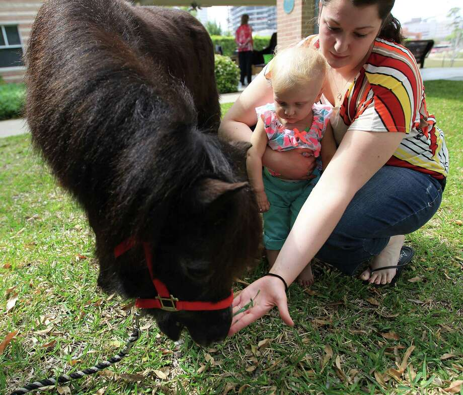 """Stuart"" a U.K. Londonderry Shetland pony visits with Addyson, 19-months, and her mother Michelle. Photo: Karen Warren, Houston Chronicle / © 2013 Houston Chronicle"