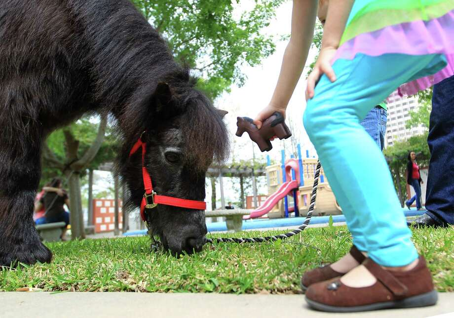 """Stuart"" a U.K. Londonderry Shetland pony is offered a toy pony by MaKinnley, 4, as Personal Ponies brought two U.K. Londonderry Shetland ponies visit with children staying at the Ronald McDonald house on behalf of the Pin Oak Charity Horse Show, Tuesday, March 19, 2013, in Houston. Photo: Karen Warren, Houston Chronicle / © 2013 Houston Chronicle"