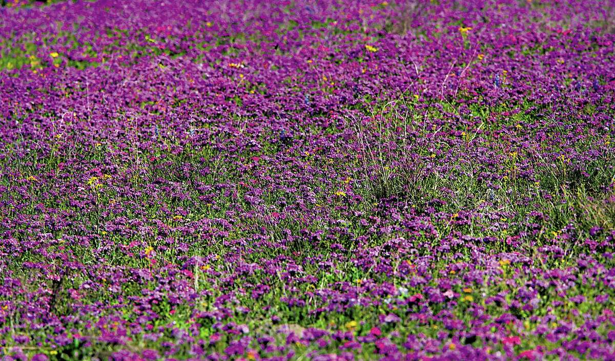 Although the wildflower display isn't as widespread as some years, there still are blooms to be found.