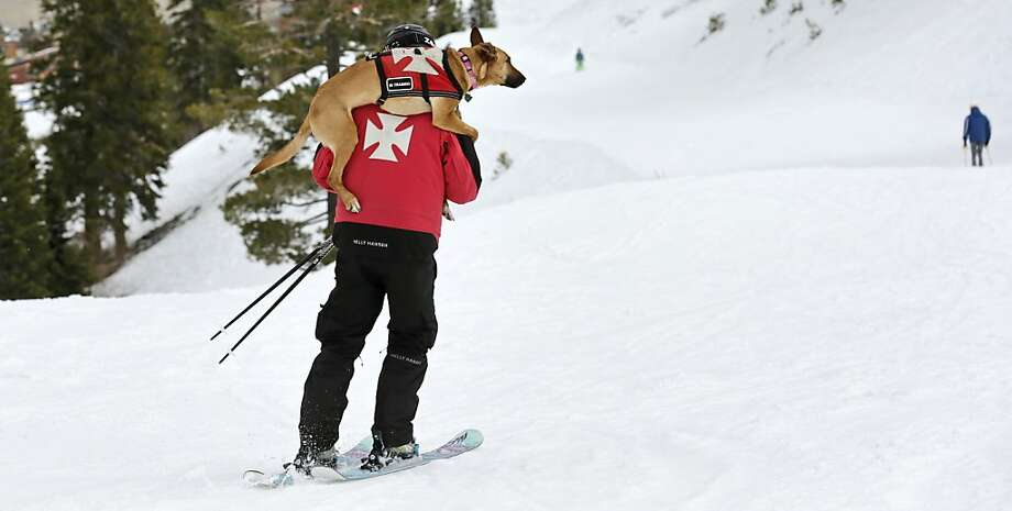 Schuss puppy: With his rescue dog, Kaya, on his back, patroller Ben Stone skis to the base after search training at Squaw Valley. Photo: Charles Krupa, Associated Press