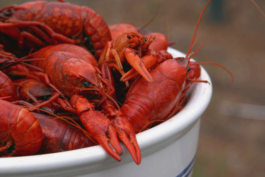 Crawfish are the main attraction April 14 when Landry's in The Woodlands celebrates the Crawfish Festival and Crawfish Cruise. / 328848