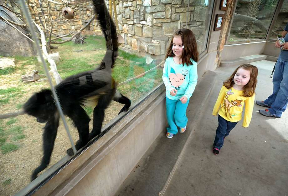 This way, girls:The Vasquez sisters, Mackenzie, 4, and Madison, 3, play follow the monkey at the Abilene Zoo in Abilene, Texas. Photo: Nellie Doneva, Associated Press