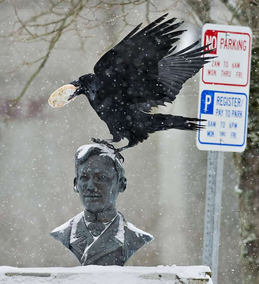 That's so raven: A bird on a bust bites a bagel in Juneau's Manila Square. Photo: Michael Penn, Associated Press
