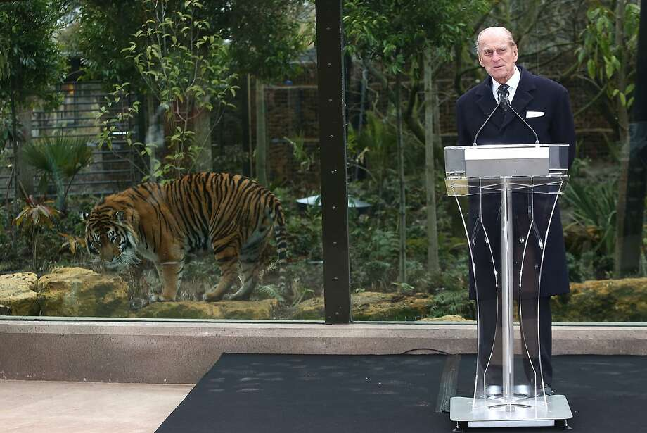 Eavesdropper: Jae Jae listens to Prince Philip, Duke of Edinburgh, opening the London Zoo's new Tiger Territory, which will house the Sumatran tiger and a female named Melati. Photo: Tim P. Whitby, Getty Images