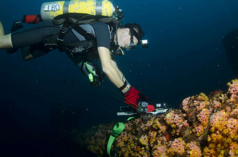 A diver examines marine life living in an artificial reef created by a decommissioned rig in the Gulf of Mexico.