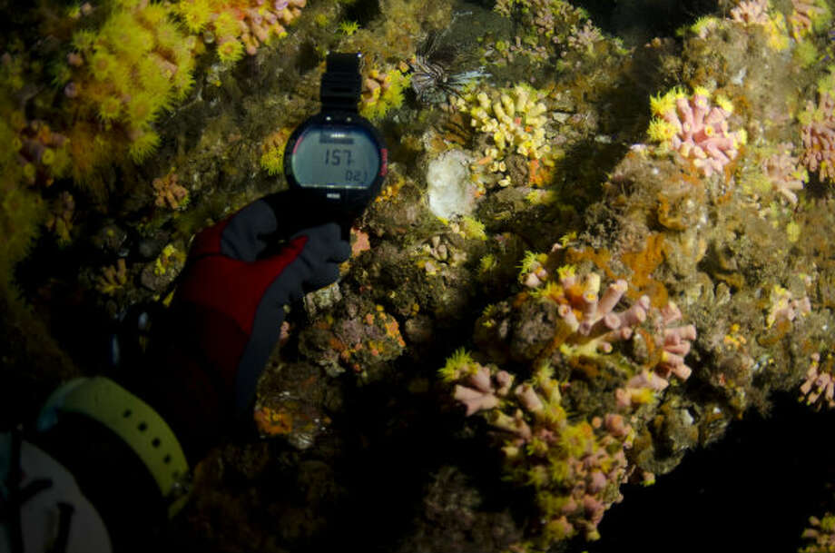 A diver holds up a watch to an artificial reef created by a decommissioned rig in the Gulf of Mexico.
