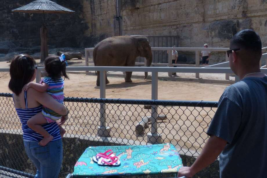 Visitors to the San Antonio Zoo watch Lucky the Asian elephant in her enclosure on Tuesday, March 19, 2013, days after her companion elephant, Boo, died. Photo: San Antonio Express-News