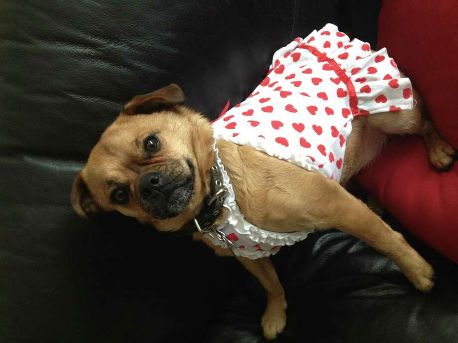 Zahra poses in her Valentines Day dress at her home in Colonie. (Louise Weiss)