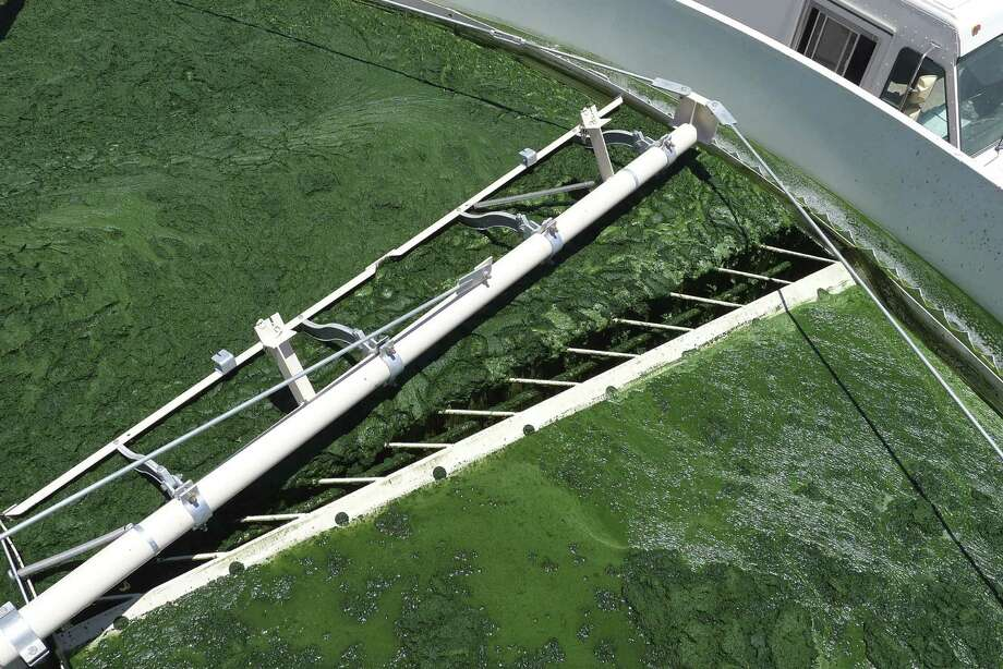 Sapphire Energy's algae farm in Columbus, N.M., expects full-scale production of its algae-derived crude oil to reach 100 barrels a day late next year. San Antonio-based Tesoro will be Sapphire's first commercial customer. Photo: Courtesy Photo