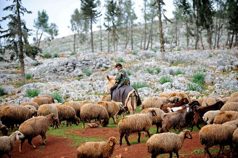 A Syrian shepherd cares for his flock near the ruins of the ancient Roman city of of Serjilla, in the northwestern province of Idlib, on March 19, 2013. The conflict in Syria has killed at least 70,000 people, and forced more than one million Syrians to seek refuge abroad. BULENT KILIC/AFP/Getty Images Photo: Bulent Kilic, AFP/Getty Images