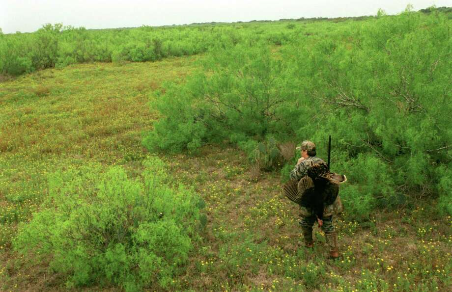 Spring turkey season opened Saturday in the state's South Zone, and hunters afield generally reported plenty of gobbling, an indication mating season is in full swing. Photo: Shannon Tompkins, Staff / HOUSTON CHRONICLE