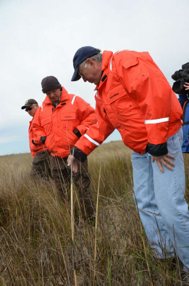 Interior Secretary Ken Salazar looks at marsh grasses that have flourished since being planted three years ago in the Big Branch National Wildlife Refuge. At left is Danny Breaux, the refuge manager.