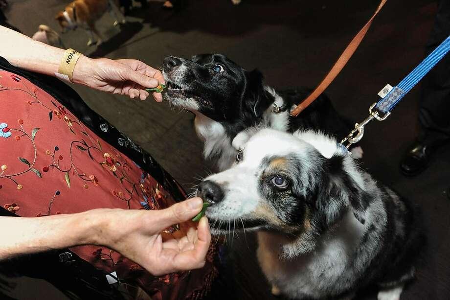 Mack and Tar enjoy some treats at the San Francisco SPCA's Bark & Whine Ball 2013. Photo: Drew Altizer Photography