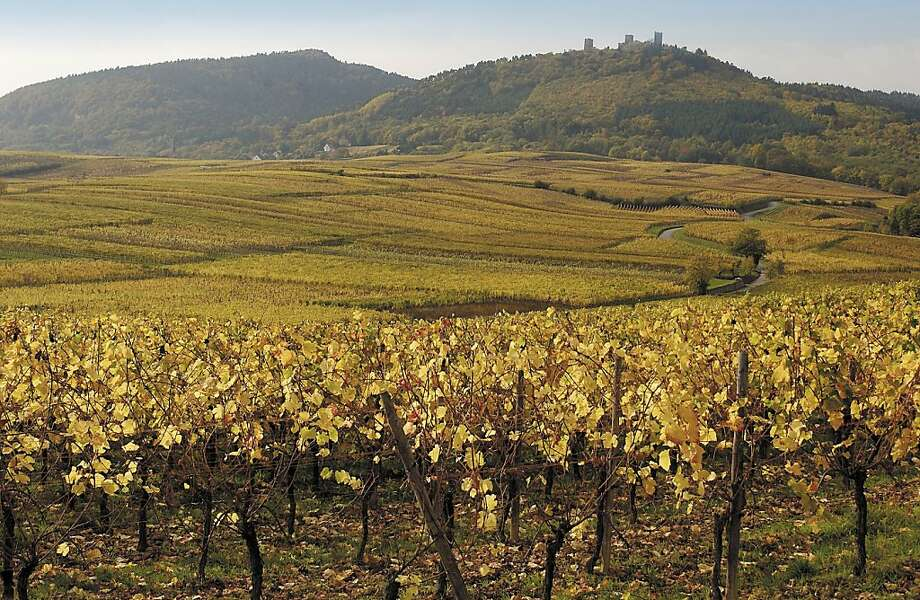Vineyards like this one in Alsace yielded smaller crops last year because of weather damage, pushing global wine production down 6 percent. Photo: -, Wines Of Alsace