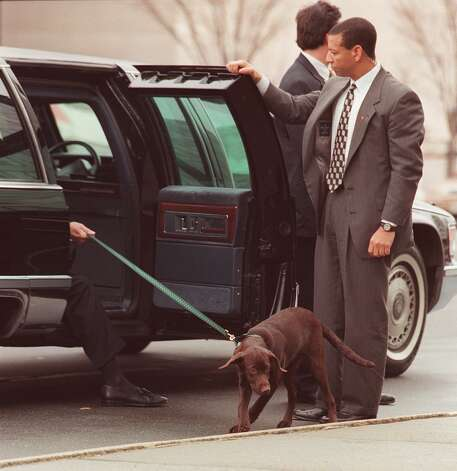 Buddy, President Bill Clinton's dog, leaves the presidential limo ahead of Clinton on Jan. 6, 1998, at the Department of Education, in Washington, D.C. Photo: LUKE FRAZZA, AFP/Getty Images / AFP