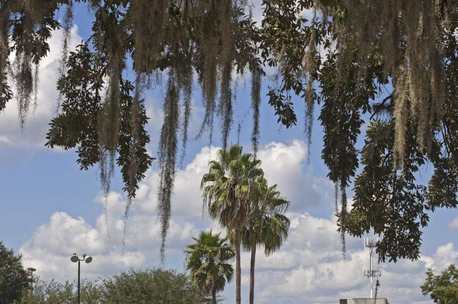 No. 6: Alachua County, Florida. This county, which is home to Gainesville, had the sixth highest number of people leaving Fairfield County to make their new home there, with an average of 965 people a year between 2006 and 2010, according to the U.S. Census Bureau. Sabal palm trees framed by oak branches