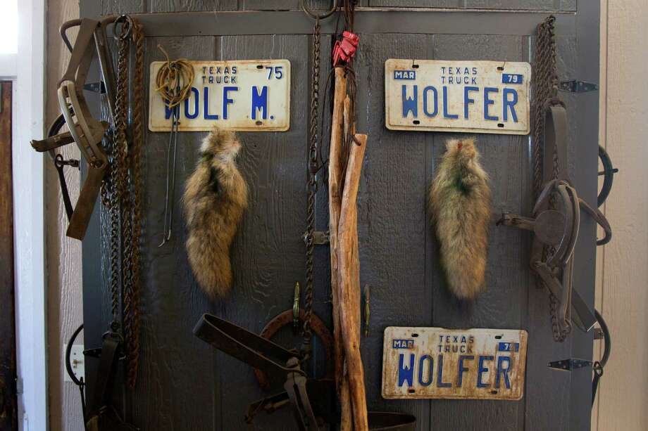 Pelts and traps are in display in The Old Jail House, a bed-and-breakfast owned by photographer Wyman Meinzer and his wife, Sylinda. (More: The state photographer has seen it all) Photo: Brett Coomer, Houston Chronicle / © 2013 Houston Chronicle