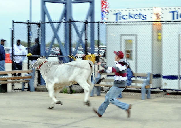 A wild bull makes its way right out the front gate at the 70th Annual YMBL Southeast Texas State Fair in Beaumont that opened up Thursday, March 21, 2013. Photo taken: Randy Edwards/The Enterprise