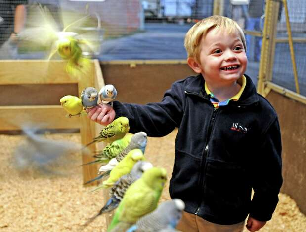 Three year old Win Crawford of Beaumont plays with parakeets in the Double R Exotics Parakeet Encounter at the 70th Annual YMBL Southeast Texas State Fair in Beaumont that opened up Thursday, March 21, 2013. Photo taken: Randy Edwards/The Enterprise Photo: Randy Edwards