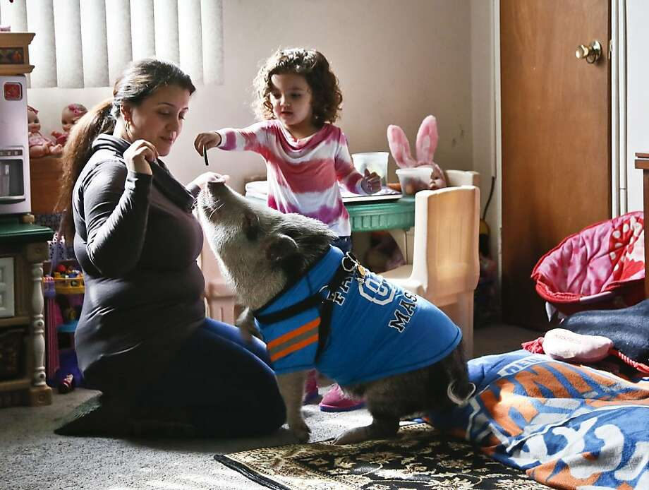 For Petey's sake: Danielle Forgione, her daughter, Olivia, and Petey the pot-bellied pig are looking for a new home after a neighbor complained about Petey to the co-op board of her apartment building in Queens. The city issued animal ordinance violations and ordered her to get rid of the pig. Photo: Bebeto Matthews, Associated Press