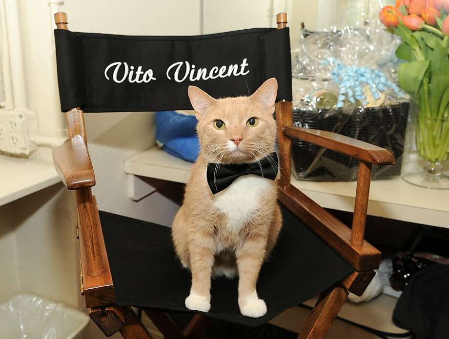 "The purrrks of being a star:In Broadway's revival of ""Breakfast At Tiffany's"" at the Cort Theatre, leading cat Vito Vincent must exit on cue, be passed around by actors and stay seated during a party scene. So, yes, he gets his own chair and all the Fancy Feast he wants. Photo: Evan Agostini, Associated Press"